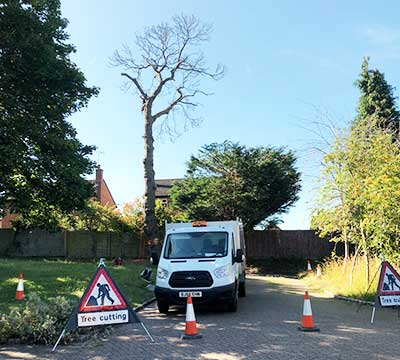 camberley-tree-surgeons-tree-removal