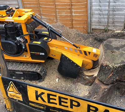 camberley-tree-surgeons-tree-stump-removal-grinding