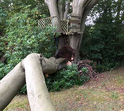 camberley-tree-surgeons-tree-surgery-emergency-tree-work